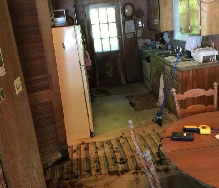 Water Damage Leads to Indoor Mushrooms Before