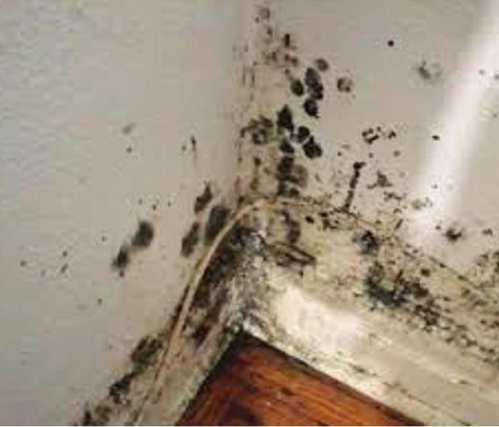 Mold Remediation Does Your Brown County Home Have A Mold Problem?