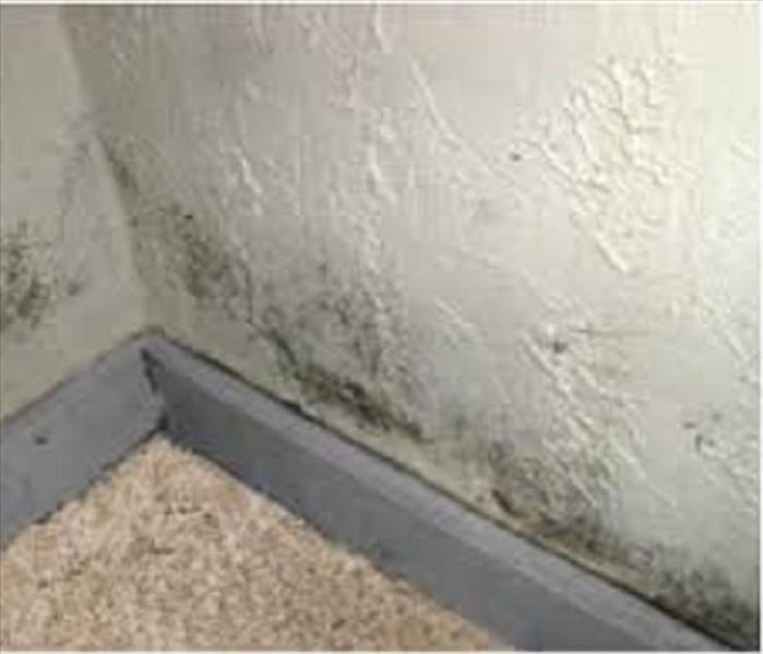 Mold Remediation Brown County Residents:  Follow These Mold Safety Tips If You Suspect Mold