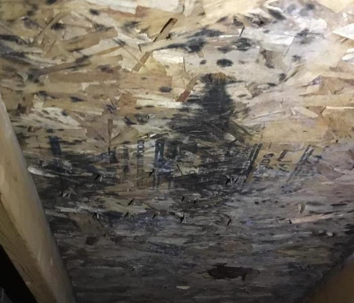 Mold Remediation Where Mold Could Be Hiding in Your House